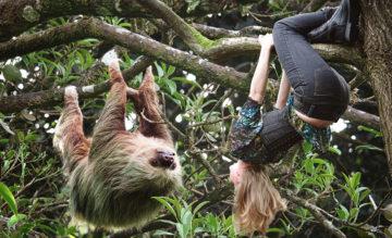 Nainen ja opian roikkuvat puun oksalla päät alaspäin.